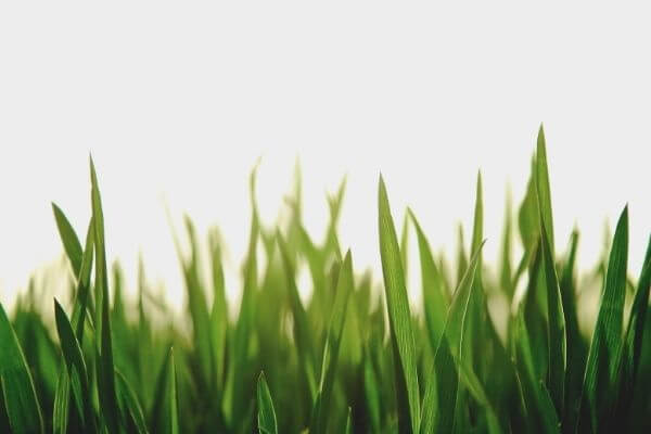 Lawn Care Services available from Finishing Touches Landscaping & Maintenance