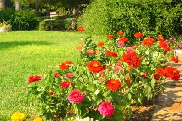 Bed Flowers Maintenance Bothell, WA