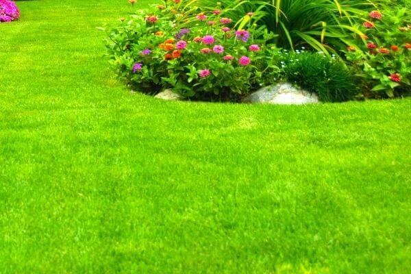 Lawn-Care-in-Bellevue-WA